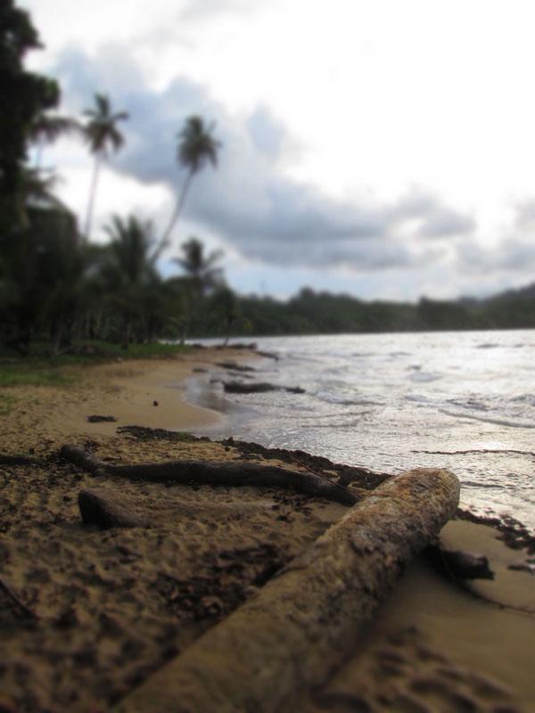 beach logs