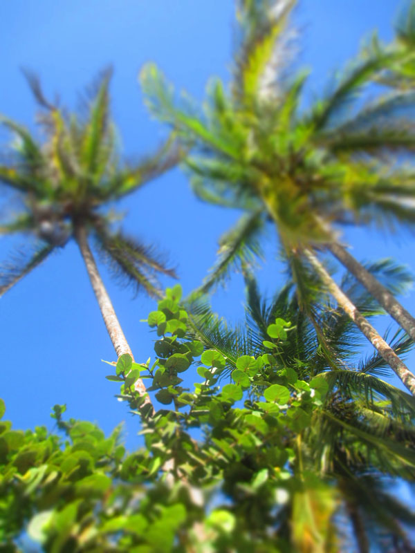 palm trees arrecife
