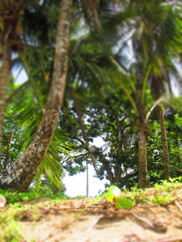 arrecife trees