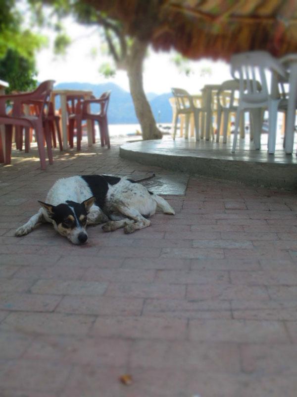 Taganga Dog