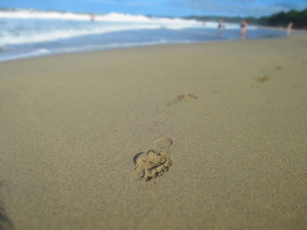 footprint cocles