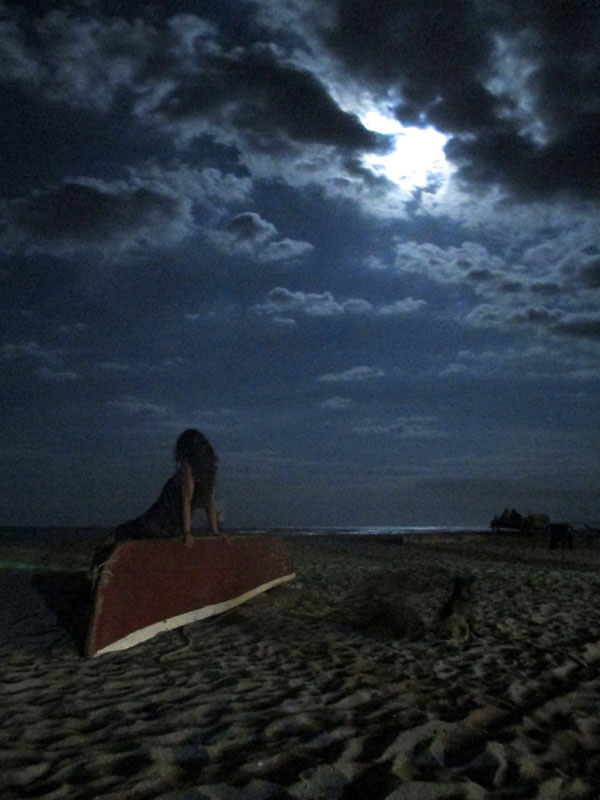 Palomino Moonlight