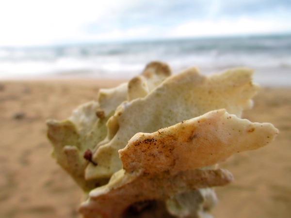 beach coral