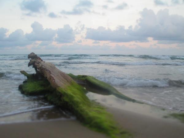 mossy driftwood