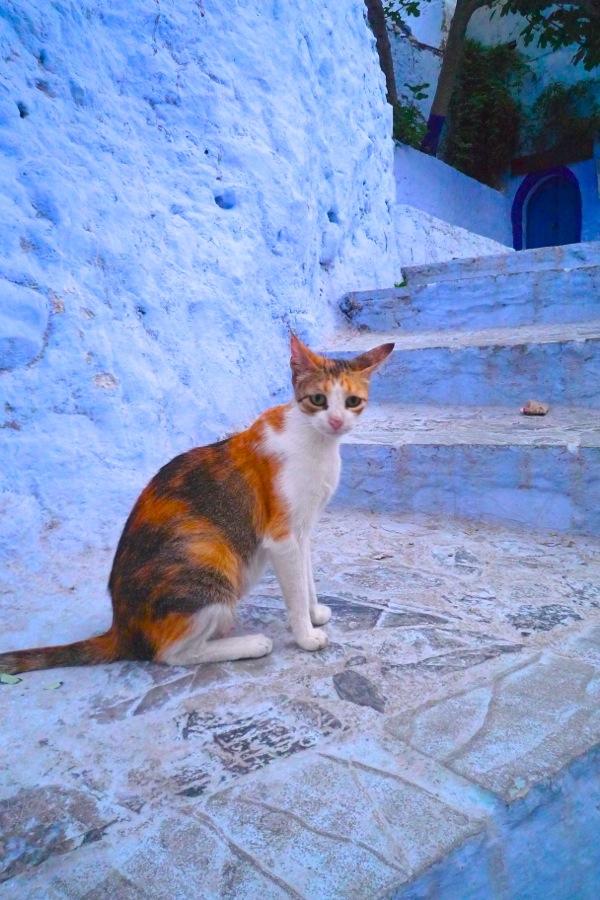 Chechaoeun cat