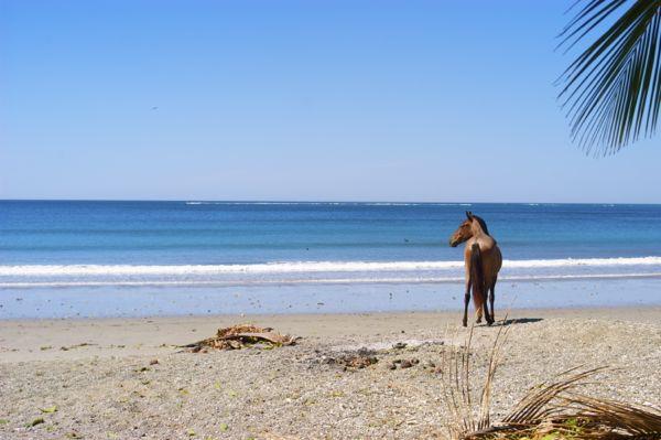 playa samara horse