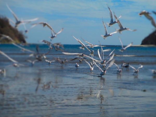 birds playa samara
