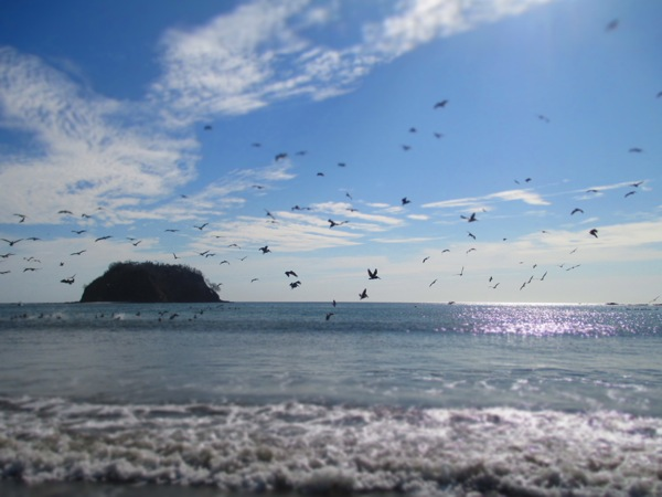playa samara birds