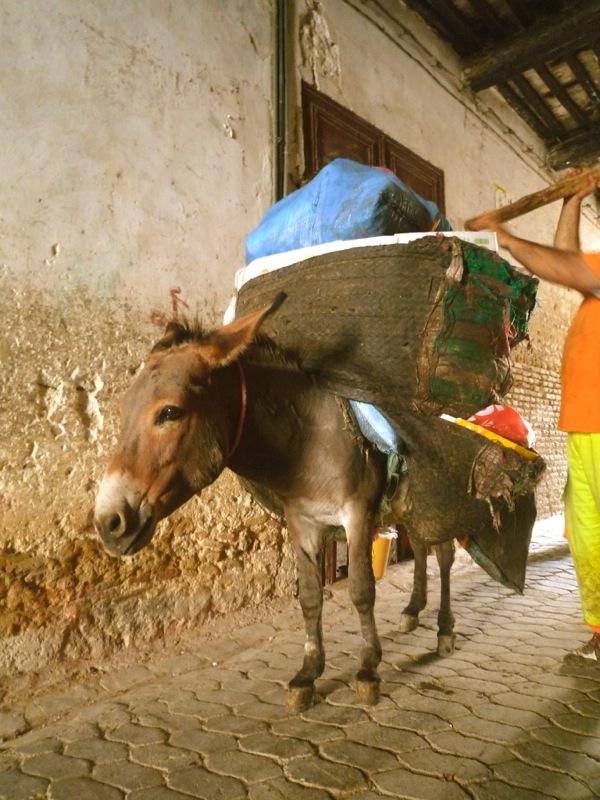 donkey in Fez