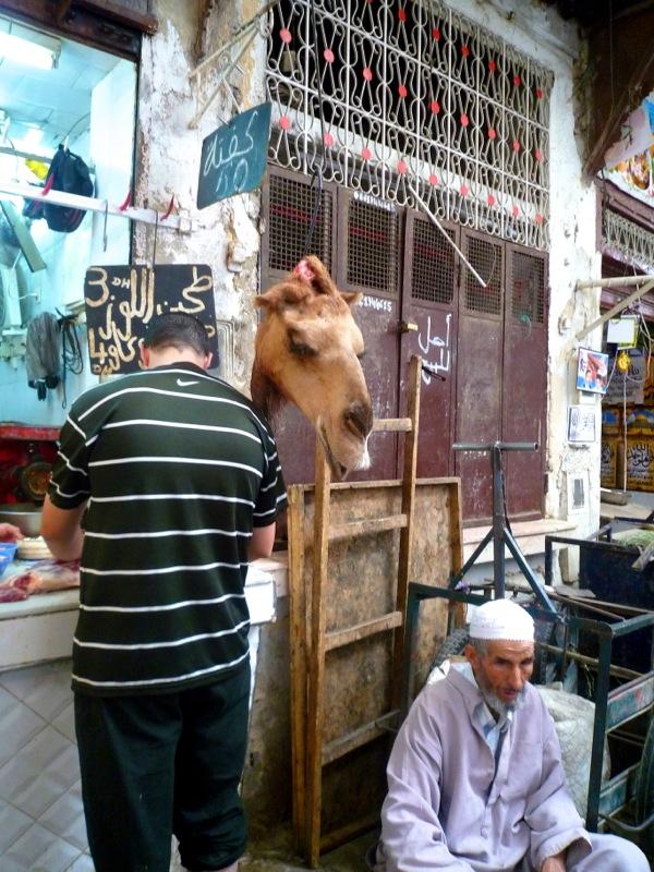Fez camel head