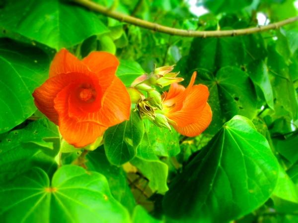 wild flowers Costa Rica