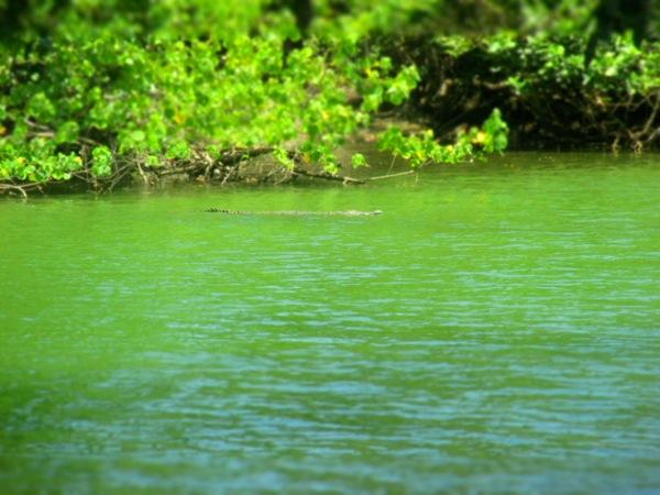 La Sirena River Corcovado